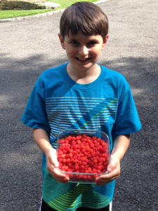 Lots and lots of wineberries!